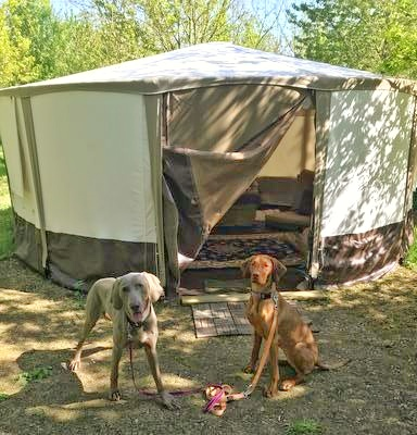Dog-friendly glamping in Somerset at Woodland Escape