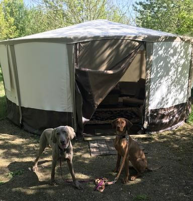 Dog-friendly Yurt glamping in Somerset at Woodland Escape