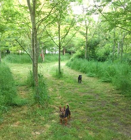 Two dogs at Woodland Escape Glamping in Somerset