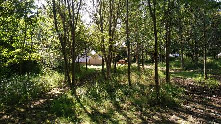 Woodland glamping for the family in Somerset at Woodland Escape