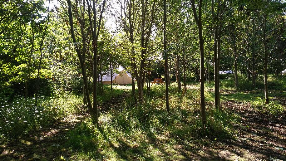 Bell tents through the trees at Woodland Escape glamping in Somerset