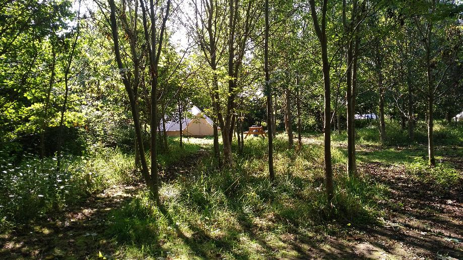 Glamping for groups in Somerset at Woodland Escape