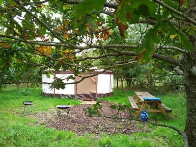 Glamping in Yurts, Somerset at Woodland Escape