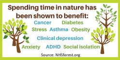 Woodland holiday health benefits