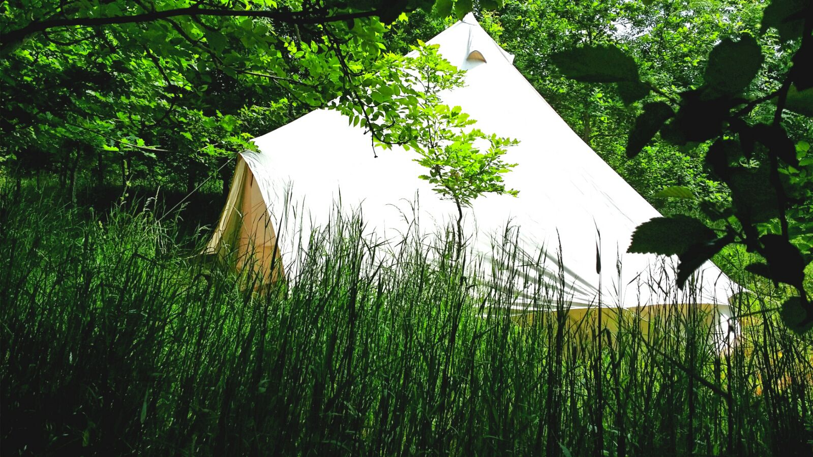 Glamping in Somerset at Woodland Escape